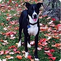 Adopt A Pet :: Ben - Hamilton, ON