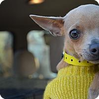 Adopt A Pet :: Rory - Westminster, CO