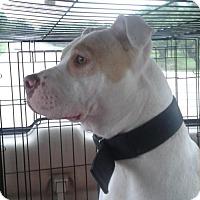 Adopt A Pet :: A297015  Max - San Antonio, TX