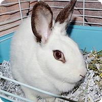 Adopt A Pet :: Doris - San Jacinto, CA