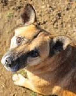Shepherd (Unknown Type) Dog for adoption in Memphis, Tennessee - King