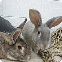 Adopt A Pet :: Cadburry & Chewie - Newport, DE