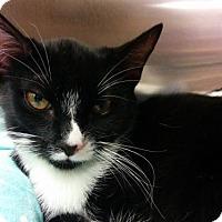Adopt A Pet :: Violet - Fullerton, CA