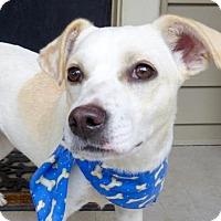 Adopt A Pet :: Taffy - Baton Rouge, LA