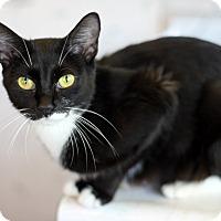 Adopt A Pet :: Matilda - Dalton, GA