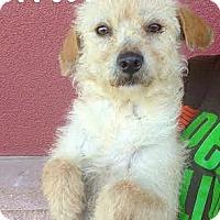 Adopt A Pet :: 377081 Barry - San Antonio, TX