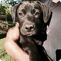 Adopt A Pet :: Cinder - Groton, MA