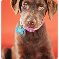 Adopt A Pet :: Pasadena - Broomfield, CO