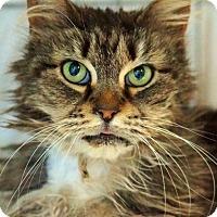 Adopt A Pet :: Malibu - Medford, MA