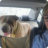 Adopt A Pet :: Hazel in FL - Mira Loma, CA