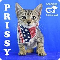 Adopt A Pet :: Priscilla - Carencro, LA