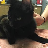 Adopt A Pet :: Mrs. Darling - Duluth, MN