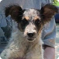 Adopt A Pet :: Squirt - Texico, IL