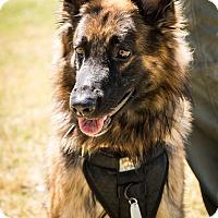 Adopt A Pet :: Grimm - Phoenix, AZ