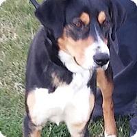 Adopt A Pet :: Benson - Mount Ayr, IA
