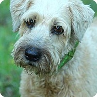 Adopt A Pet :: Colby - Lafayette, IN
