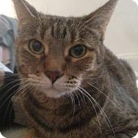 Adopt A Pet :: snickers - Mesa, AZ