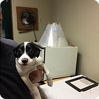 Adopt A Pet :: Bessie - Nashville, TN