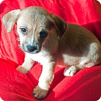 Adopt A Pet :: Jeanette - Fountain Valley, CA