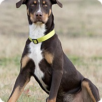 Adopt A Pet :: Kylo - Broken Arrow, OK
