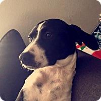 Adopt A Pet :: Georgia - Springfield, MO