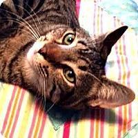 Adopt A Pet :: CAMDEN - Burlington, NC