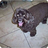 Adopt A Pet :: Howie 12yr Adopted - Mentor, OH