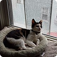 Adopt A Pet :: Nina (MP) - Little Falls, NJ