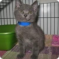Adopt A Pet :: Leland - Shelton, WA