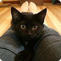 Adopt A Pet :: Kismet - Byron Center, MI