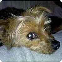 Adopt A Pet :: Jack - Columbia, SC