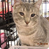 Adopt A Pet :: Peanuts - Riverside, RI