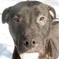 Adopt A Pet :: Bobo - Chicago, IL
