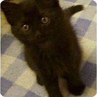 Adopt A Pet :: Sultra - Irvine, CA