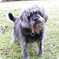 Adopt A Pet :: Kiki - Mocksville, NC