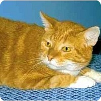 Adopt A Pet :: Tigger - Medway, MA