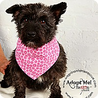 Adopt A Pet :: Maggie Mae - Omaha, NE