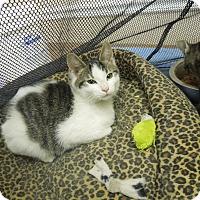 Adopt A Pet :: Smore - Medina, OH