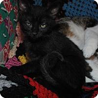 Adopt A Pet :: Sherman - Waxhaw, NC