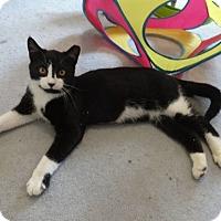 Adopt A Pet :: Jackson - Colmar, PA