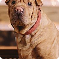 Adopt A Pet :: Mister - Portland, OR