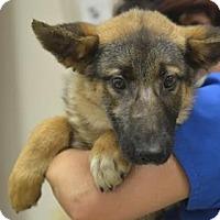Adopt A Pet :: Fennel - Dacula, GA