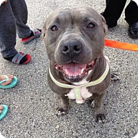 Adopt A Pet :: Baby - Villa Park, IL