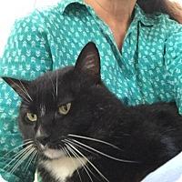 Adopt A Pet :: Oliver - San Jose, CA