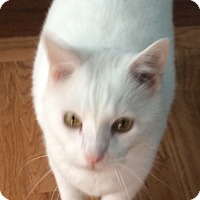 Adopt A Pet :: Willie - Lincoln, NE