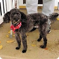 Adopt A Pet :: Ghetti - North Ogden, UT