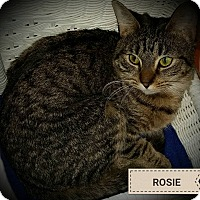Adopt A Pet :: Rose - Fairborn, OH