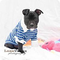 Adopt A Pet :: Oliver - Frisco, TX