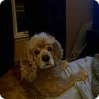 Adopt A Pet :: Jackson - Alpharetta, GA