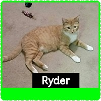 Adopt A Pet :: Ryder - Hainesville, IL